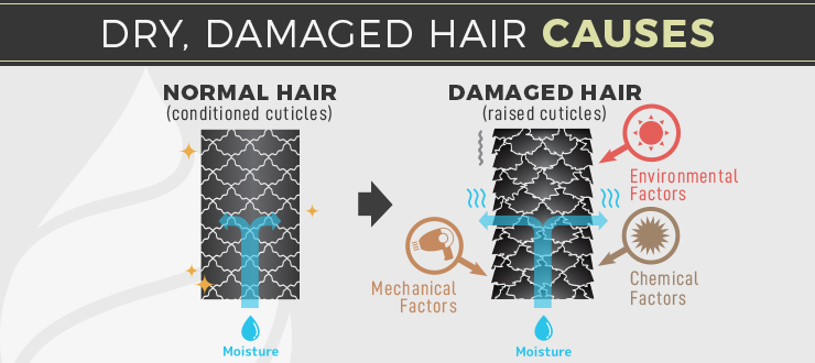 dry damaged hair causes