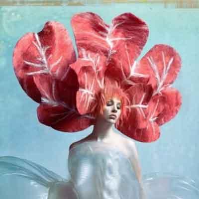 Garden Hair Collection - David Barron